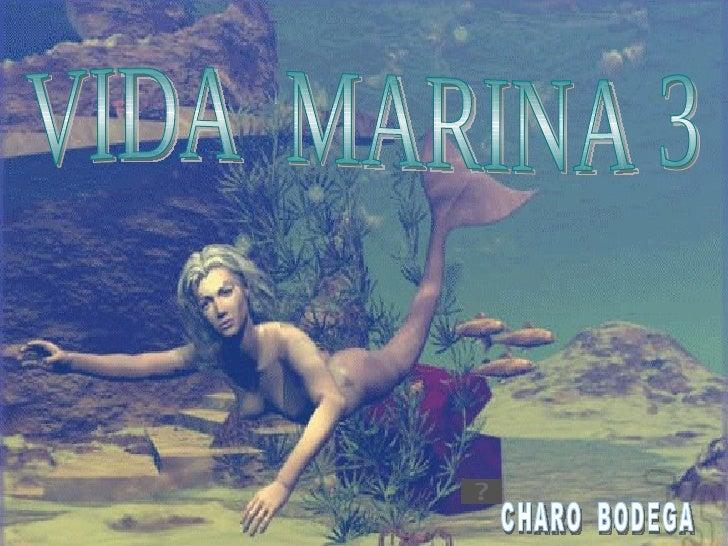 VIDA  MARINA 3 CHARO  BODEGA