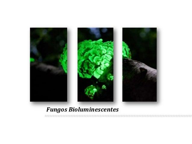 Fungos Bioluminescentes
