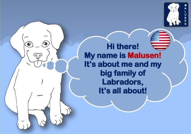 Hi there! My name is Malusen! It's about me and my big family of Labradors, It's all about!