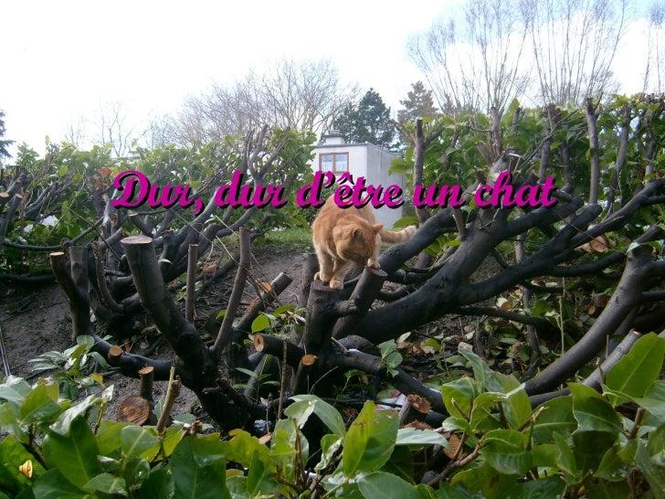 Dur, dur d'être un chat