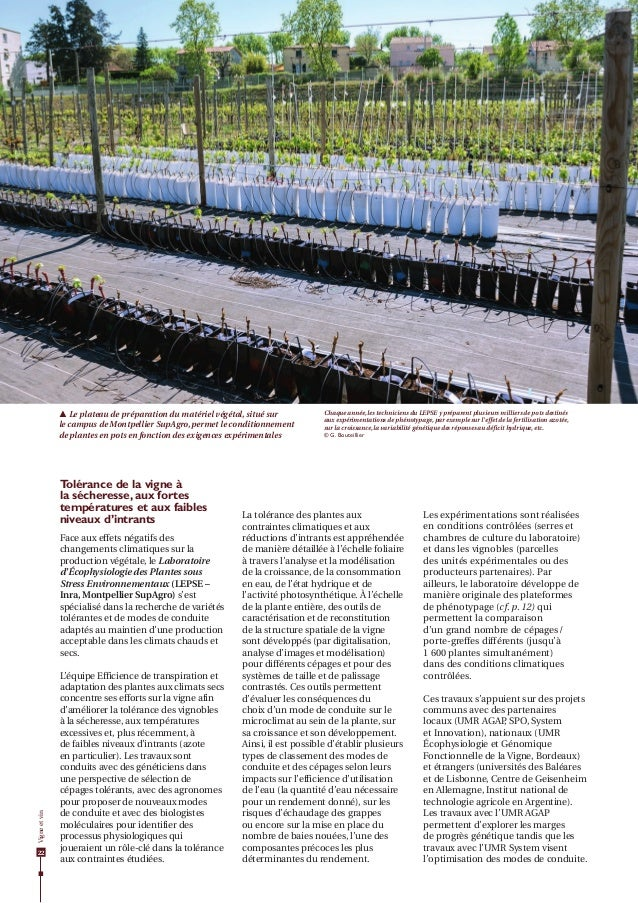 Dossier Agropolis International n°21 : vigne et vin