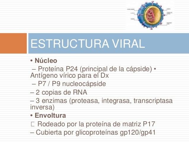 • Núcleo – Proteína P24 (principal de la cápside) • Antígeno vírico para el Dx – P7 / P9 nucleocápside – 2 copias de RNA –...