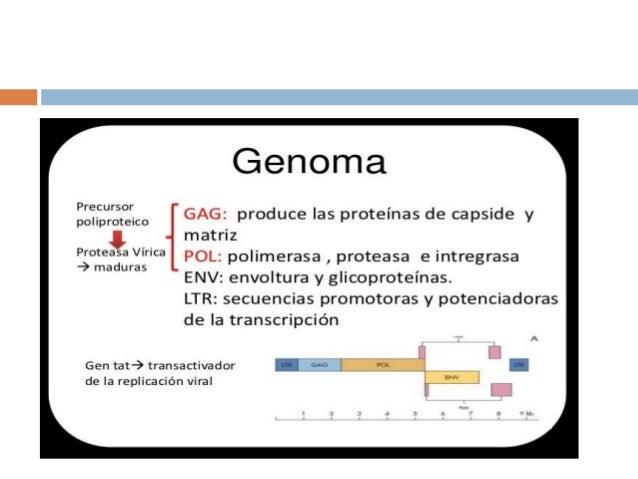 • CD4 receptor de alta afinidad – Unión insuficiente para la infección – La gp120 debe unirse a los correceptores • Recept...