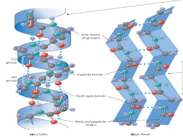 A For Alpha B For Beta >> Secondary Structure Prediction of proteins
