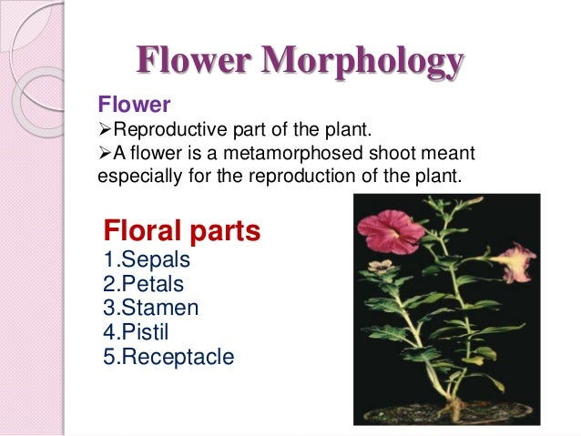 Physiology of flowering photoperiodism diagram of a typical flower ccuart Gallery