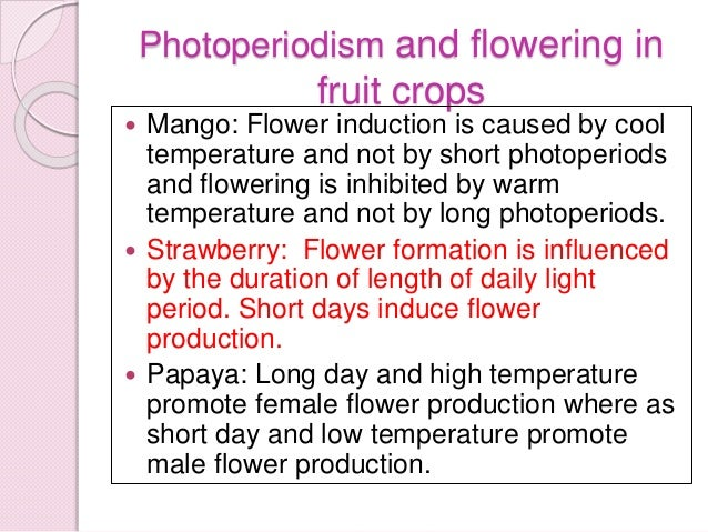 a study of photoperiodism The mechanisms of photo- periodism are studied particularly well in plants  photoperiodism involves various aspects of plant contents.