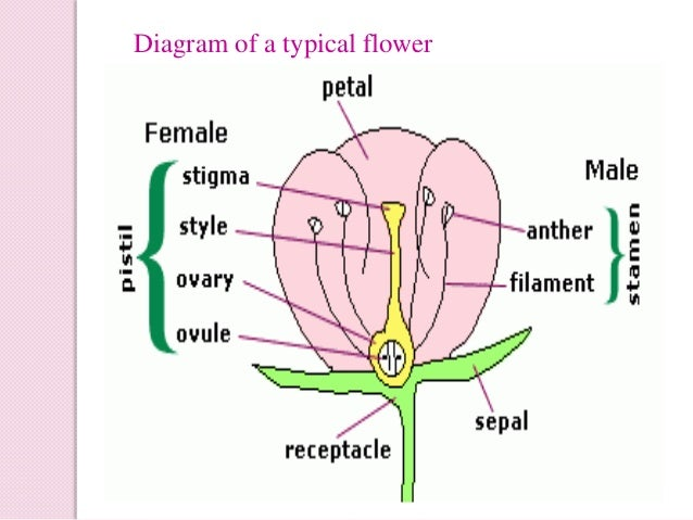 Physiology of flowering photoperiodism physiology of flowering ccuart Gallery