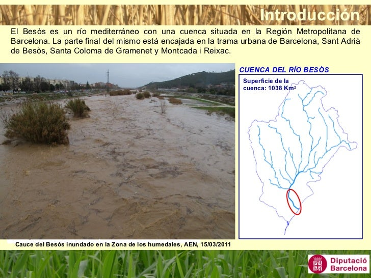 La gesti de les zones humides constru des del parc for Besos en la oficina 2