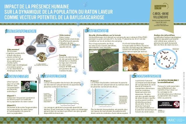Hôte normal  Raton laveur Opportuniste et omnivore Peu affecté par le parasite Utilisation de sites préférentiels de d...