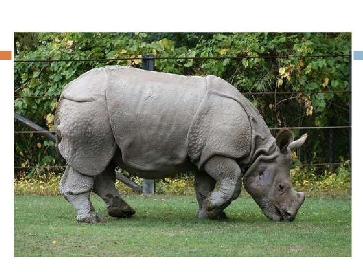 The Javan Rhinoceros researched by Vincent Jansen Van Rensburg