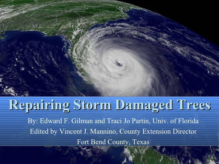 Repairing Storm Damaged Trees By: Edward F. Gilman and Traci Jo Partin, Univ. of Florida Edited by Vincent J. Mannino, Cou...