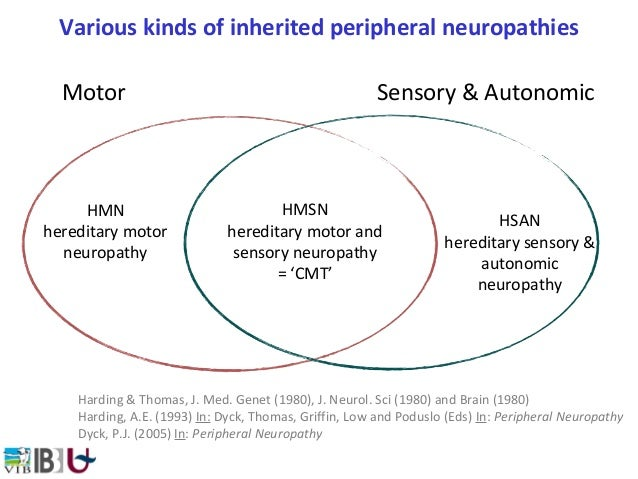 Vincent timmerman 39 neuropat as perif ricas hereditarias 39 Hereditary motor neuropathy