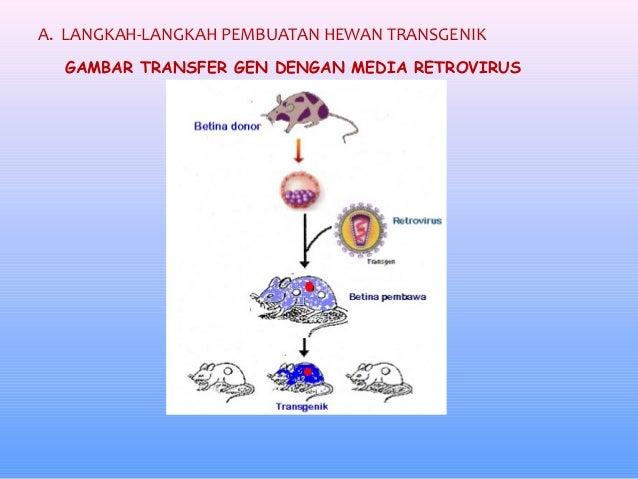 26+ Hewan transgenik dan contohnya terupdate