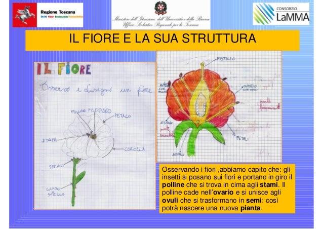 Vinci Scuola Primaria Ggalileippt