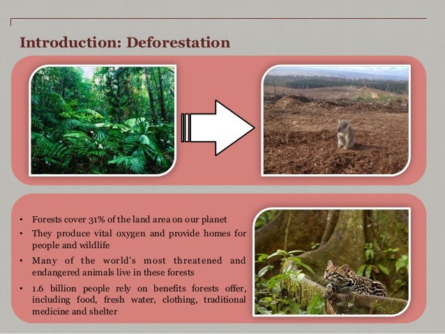 deforestation case study In this powerpoint you will be able to explore many aspects of the amazon rainforest including a case study on deforestation.