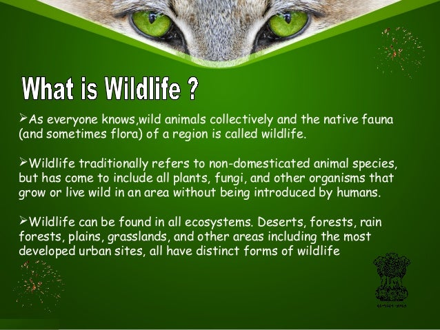 wild life protection act of india The wild life (protection) amendment bill,  the wild life (protection) act,  or commerce linked to wild life according to the government, india is a party.