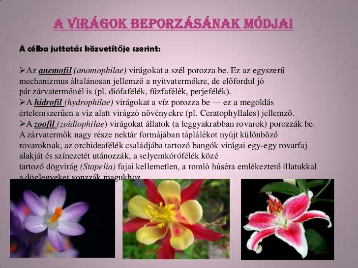 A virágok beporzásának módjaiA célba juttatás közvetítője szerint:Az anemofil (anomophilae) virágokat a szél porozza be. ...