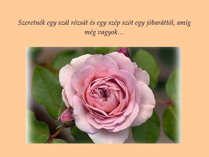 Viragok a Baratoknak 8e9b443309