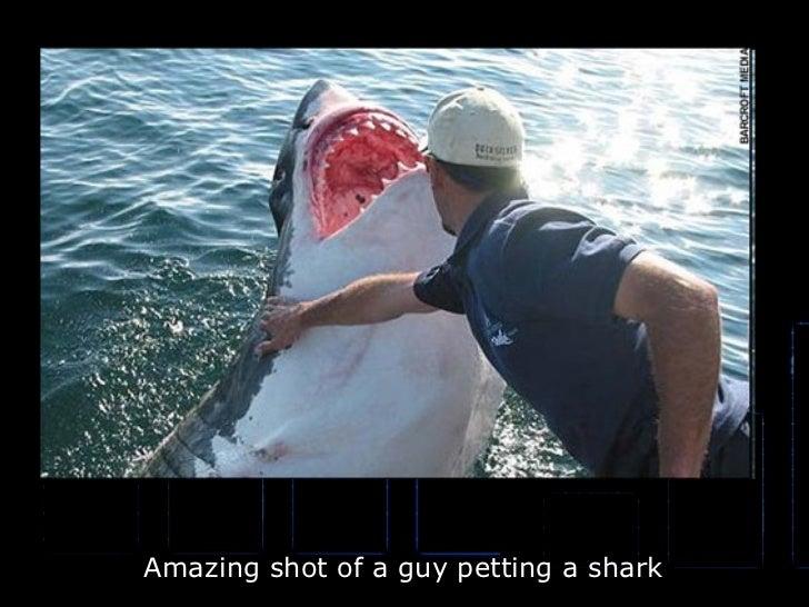 Amazing shot of a guy petting a shark