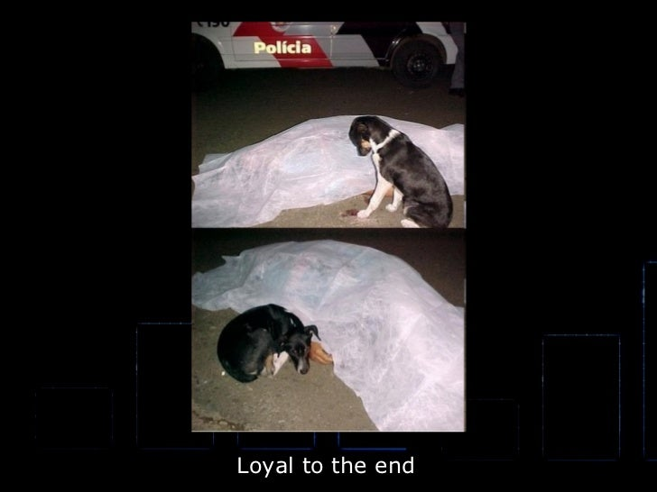 Loyal to the end