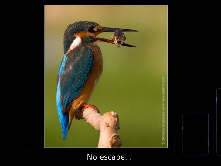 No escape…