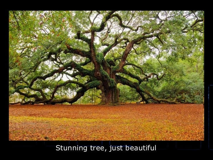 Stunning tree, just beautiful
