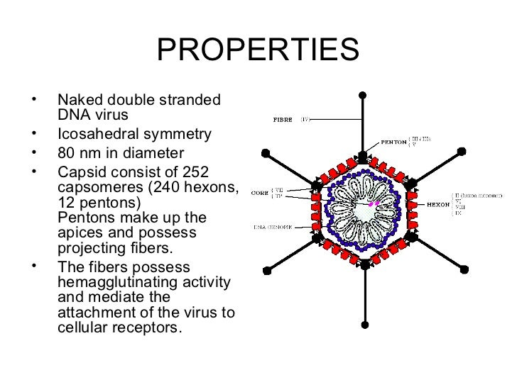 Viral infection of the respiratory tract (2) Slide 3