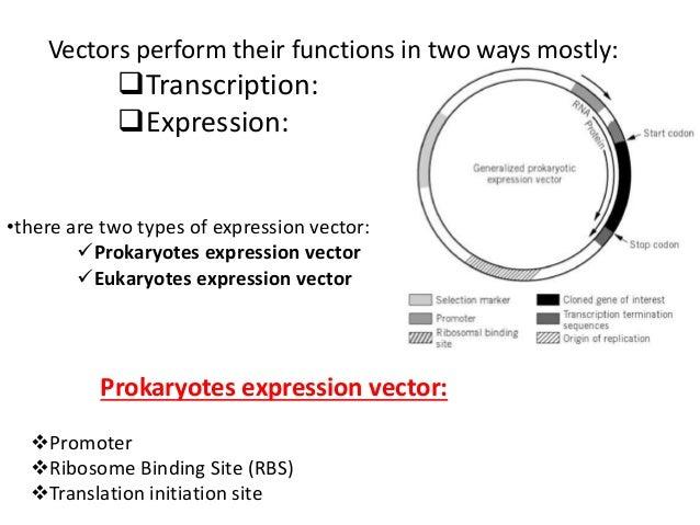 viral vectors in virology rh slideshare net vectors for leptospirosis vectors for cnc