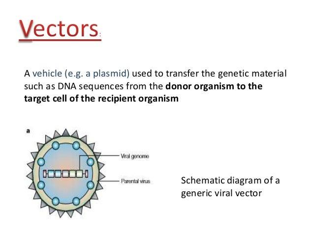 Viral Vectors In Virology