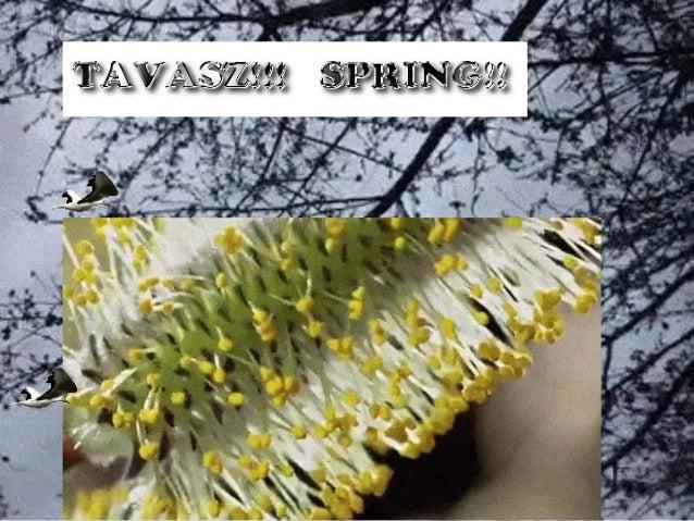 TAVASZ!!   SPRING!! Slide 2