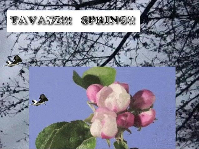 TAVASZ!!   SPRING!! Slide 3