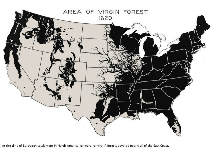 At the time of European settlement in North America, primary (or virgin) forests covered nearly all of the East Coast.