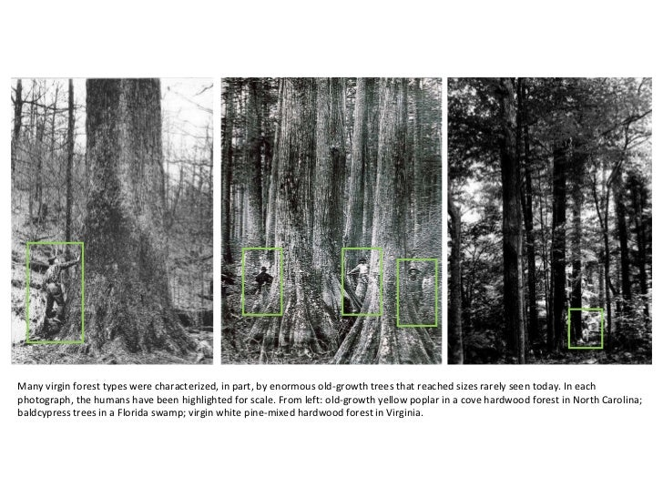 Hardwood Lumber South Carolina 1000 Images About Heartwood