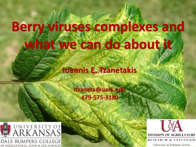 Berry viruses complexes and  what we can do about it       Ioannis E. Tzanetakis          itzaneta@uark.edu             47...