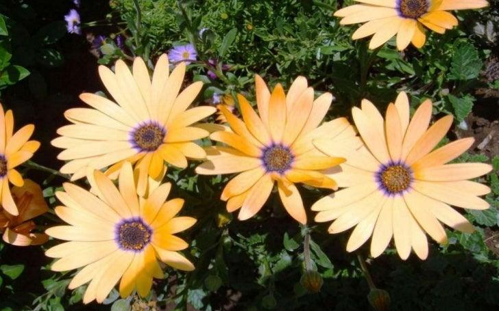 Virágmezök (3) [email_address]