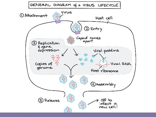Introduction To Virology