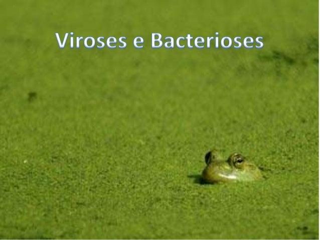 Viroses