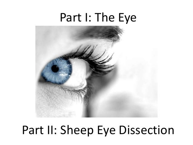 Part I: The Eye Part II: Sheep Eye Dissection