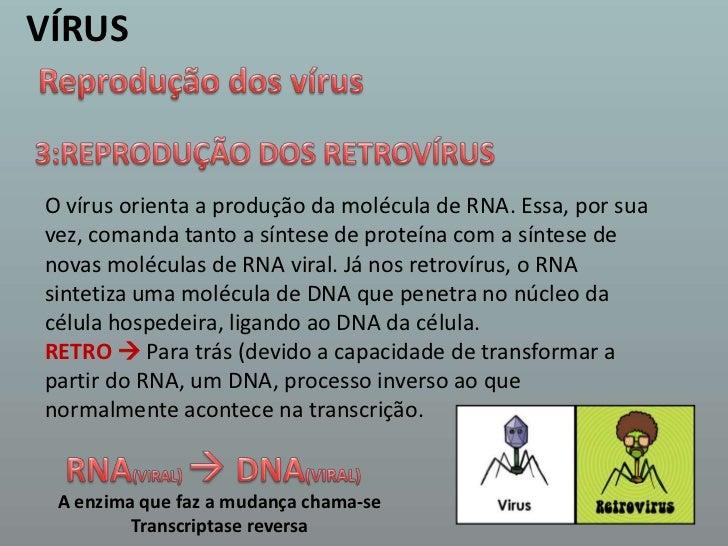 VÍRUS<br />Reprodução dos vírus<br />3:REPRODUÇÃO DOS RETROVÍRUS <br />O vírus orienta a produção da molécula de RNA. Essa...