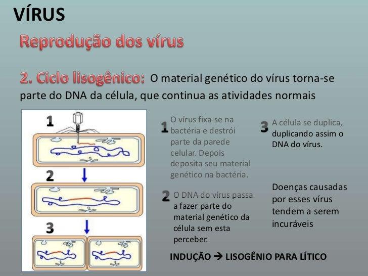 VÍRUS<br />Reprodução dos vírus<br />2. Ciclo lisogênico:<br />O material genético do vírus torna-se<br />parte do DNA da ...