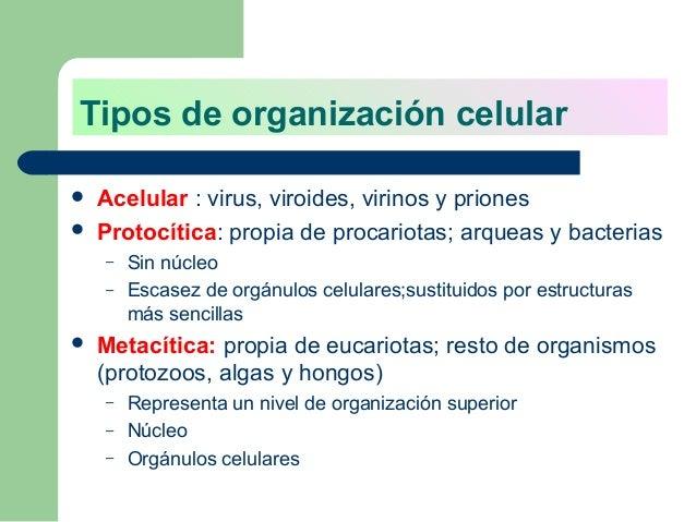Organizaci n acelular virus viroides priones for Tipos de arboles y caracteristicas