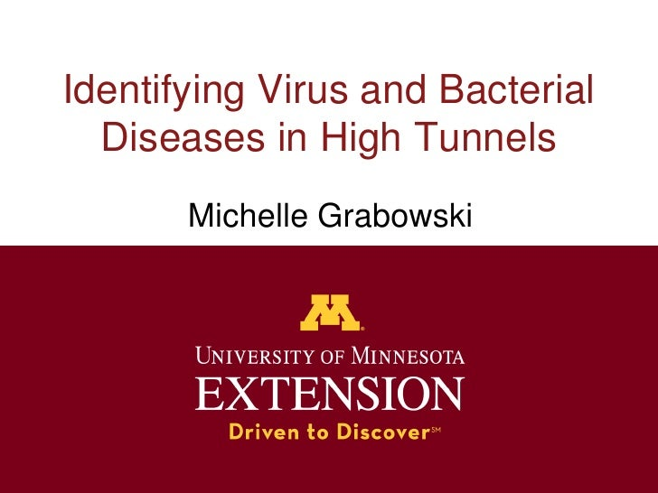 Identifying Virus and Bacterial  Diseases in High Tunnels       Michelle Grabowski