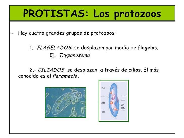 Resultado de imagen de Los protozoos son organismos unicelulares, pero a diferencia de las bacterias