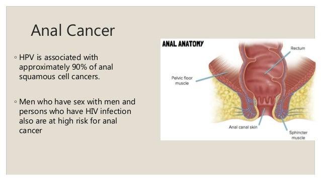 Anatomy of gay sex