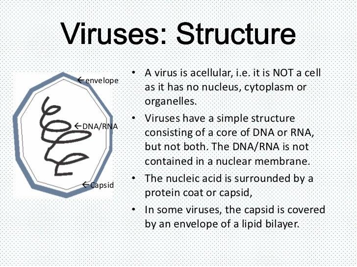 Viruses bacteria protists and fungi – Bacteria and Viruses Worksheet