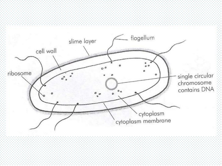 Viruses Bacteria Protists And Fungi