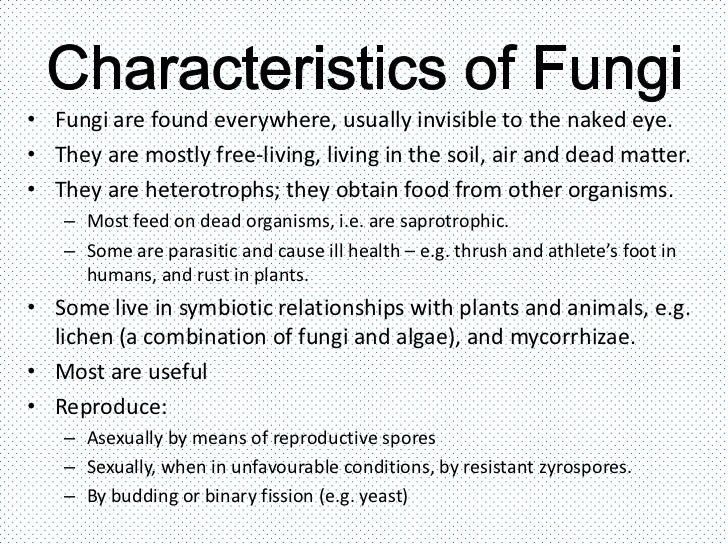 Plants Vs Fungi Vs Animals Venn Diagram Ecza Solinf Co Rh Ecza