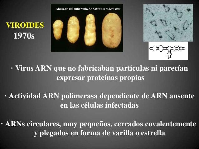 VIROIDES = RIBOZIMAS Participan en la catálisis de su propia replicación, funcionando a la vez como un genoma y un enzima ...