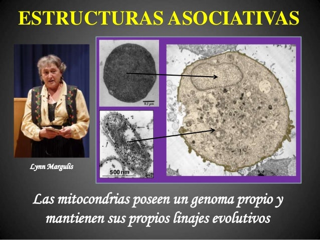 ¿GENOMAS ASOCIATIVOS? SUBMUNDO DE LA RETROTRANSCRIPCIÓN DESOXIVIRUS EUKARYOTA BACTERIA β-PROTEOBACTERIA (¿extintas?) ARCHA...