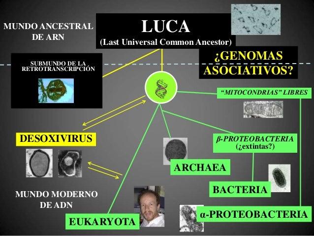 Integración de genomas en el genoma celular BACTERIAS Fagos temperados (lisogenia) ANIMALES Retrovirus, Hepadnavirus, Papi...